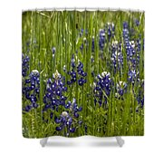 Bluebonnets In The Grass Shower Curtain