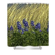 Bluebonnets With Ladybug Shower Curtain