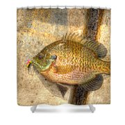 Bluegill In Hdr Shower Curtain