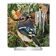 Bluejay And Ice Shower Curtain