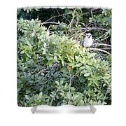 Bluejay Resting Shower Curtain