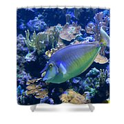 Bluespine Unicornfish Shower Curtain by Karon Melillo DeVega