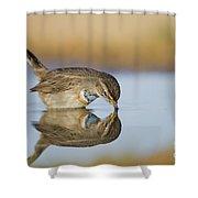 Bluethroat Shower Curtain