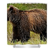 Bluetooth Grizzly 2 Shower Curtain