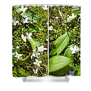 Bluets In Stereo Shower Curtain