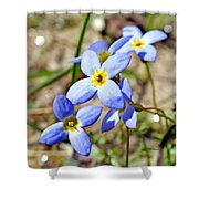 Bluets Upclose Shower Curtain