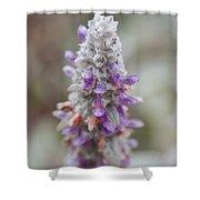Blumen Shower Curtain