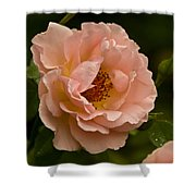Blush Pink Rose With Dew Shower Curtain
