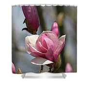 Blushing Magnolia Shower Curtain