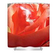Blushing Orange Rose 2 Shower Curtain