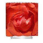 Blushing Orange Rose 5 Shower Curtain