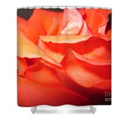 Blushing Orange Rose 6 Shower Curtain