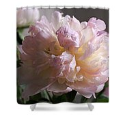 Blushing Peony Shower Curtain