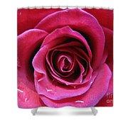 Blushing Pink Rose 3 Shower Curtain