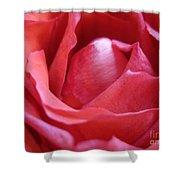Blushing Pink Rose Shower Curtain