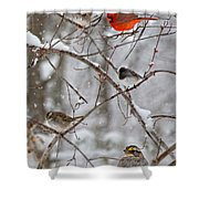 Blushing Red Cardinal In The Snow Shower Curtain