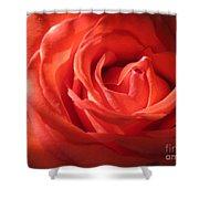 Blushing Orange Rose 1 Shower Curtain