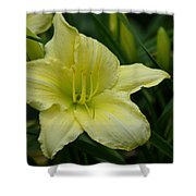 Blushing Yellow - Lilies Shower Curtain