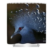 Blutiful.. Shower Curtain