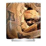 Boa Constrictor Shower Curtain