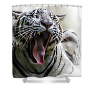 Board Shower Curtain