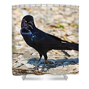 Boat-tailed Grackle Shower Curtain