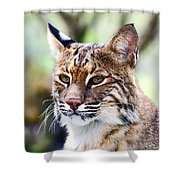 Bob Cat Pose Shower Curtain