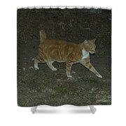 Bob-tail Cat Shower Curtain