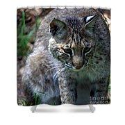 Bobcat 20 Shower Curtain