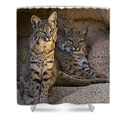 Bobcat 8 Shower Curtain