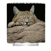 Bobcat, Arizona Shower Curtain