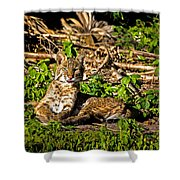 Bobcat At Sunset Shower Curtain