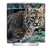Bobcat Beauty Shower Curtain