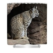 Bobcat Shower Curtain by Bob Christopher
