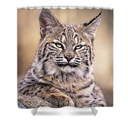 Bobcat Cub Portrait Montana Wildlife Shower Curtain