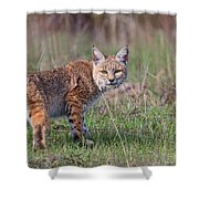 Bobcat Glance Shower Curtain by Beth Sargent