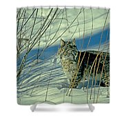 Bobcat In Snow Shower Curtain