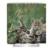 Bobcat Kitten Resting On A Log Idaho Shower Curtain