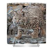 Bobcat On Rock Shower Curtain