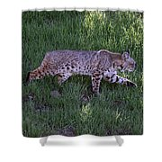 Bobcat On The Move Shower Curtain