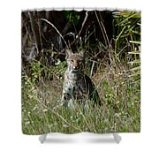 Bobcat On The Prowl Shower Curtain