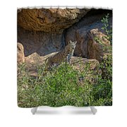 Bobcat Point Shower Curtain