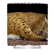 Bobcat Shower Curtain by Rose Santuci-Sofranko