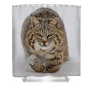 Bobcat Running Forward Shower Curtain by Jerry Fornarotto