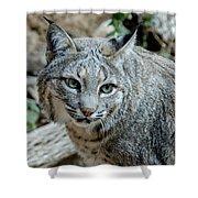 Bobcat's Gaze Shower Curtain