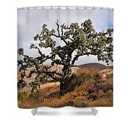 Bobcats Tree Shower Curtain