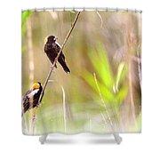 Bobolink - 6 Shower Curtain