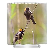 Bobolink Duo Shower Curtain