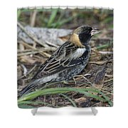 Bobolink Feeding Shower Curtain