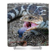 Bobtail Lizard Shower Curtain